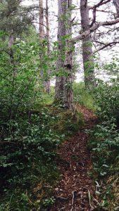 Ob früh morgens durch den Wald...