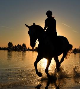 Nicht nur die körperliche, auch die phsychische Verbindung zwischen dir und deinem Pferd ist wichtig! © pexels