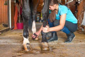 Auch im Pferdesport gibt es allerhand verschiedene (mentale) Typen! ©Shutterstock | Anne Elizabeth Photography